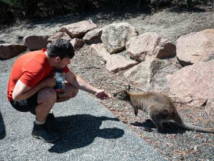Callum getting kisses from a wallaby