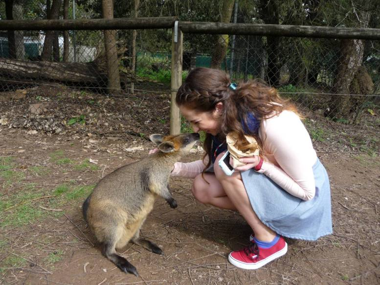 Nose to nose with a little wallaby