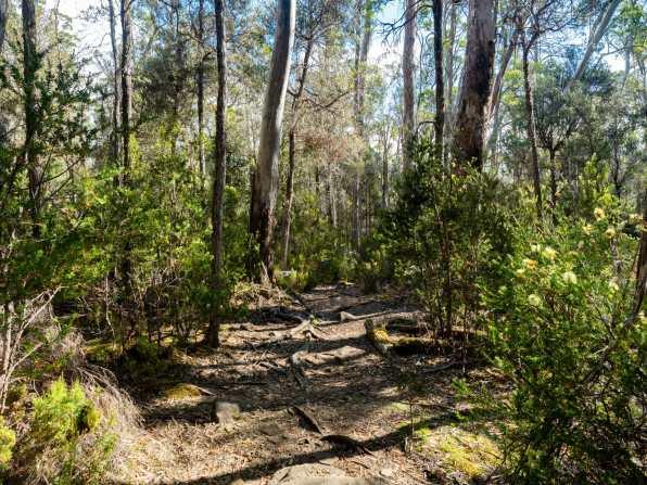 Root-strewn trail