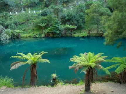 Looking for platypus in Blue Lake