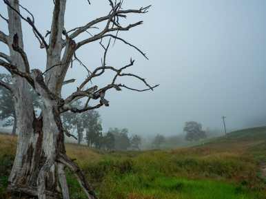 Misty morning in Megalong