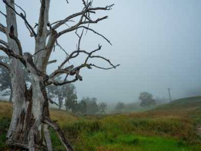 Misty morning in Megalong