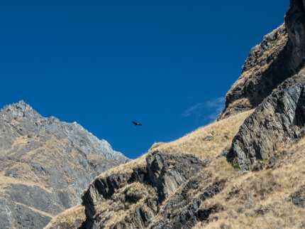 Condors circling overhead