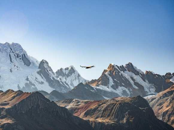 Condors at Cerro Huacrish