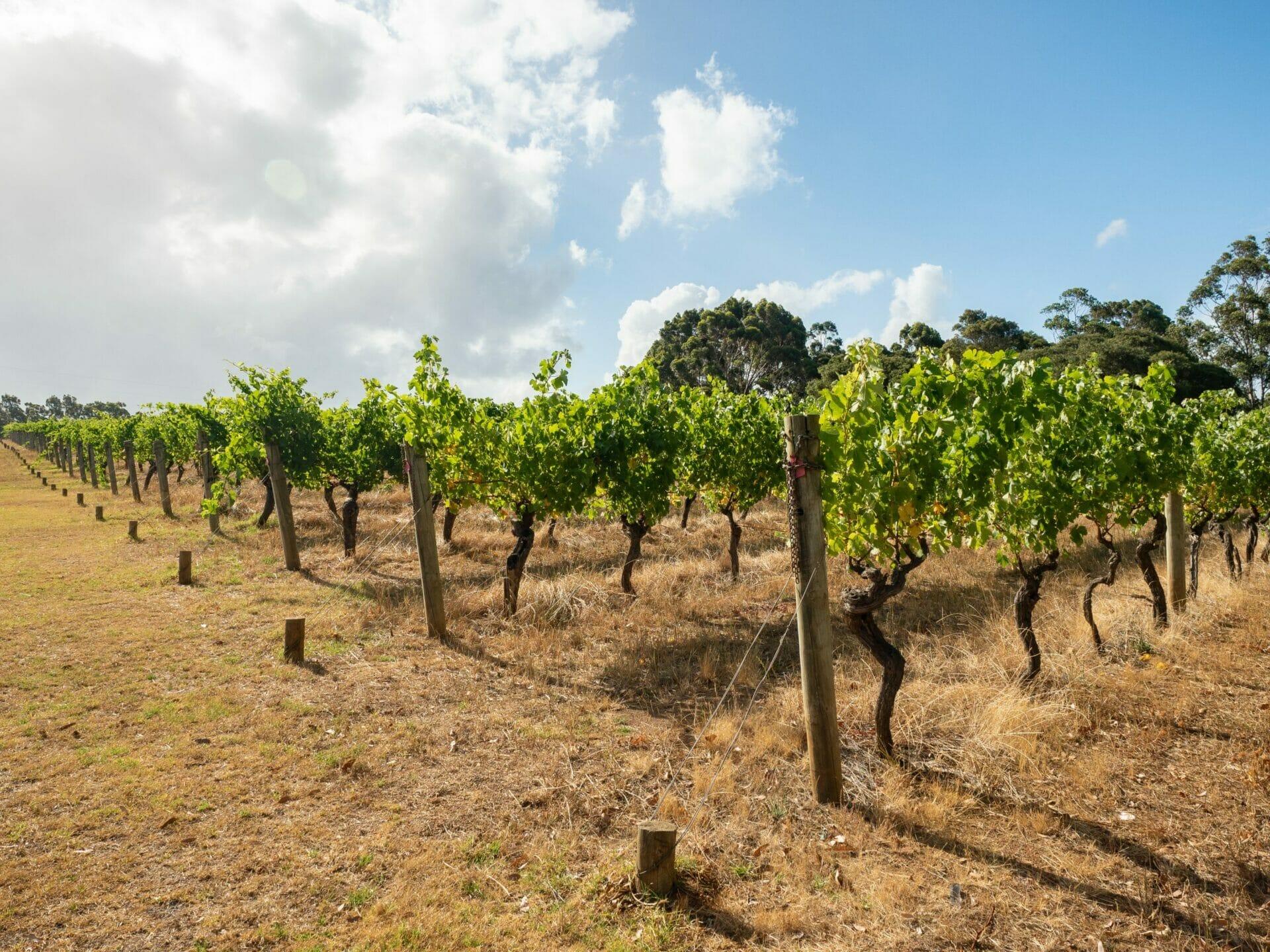 Vineyard Margaret River Western Australia