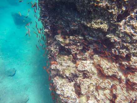 Snorkelling at Isla Bartolomé
