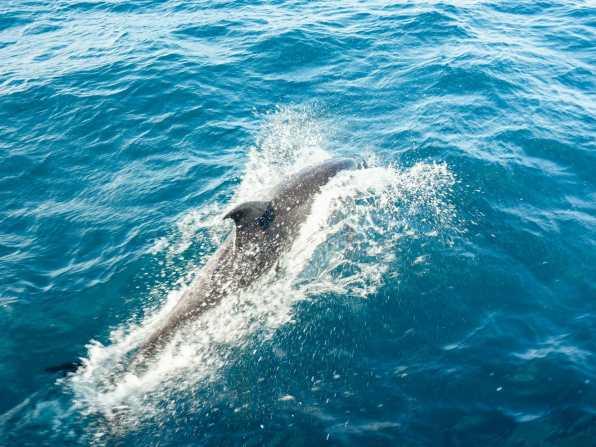 Dolphins at Bartolome