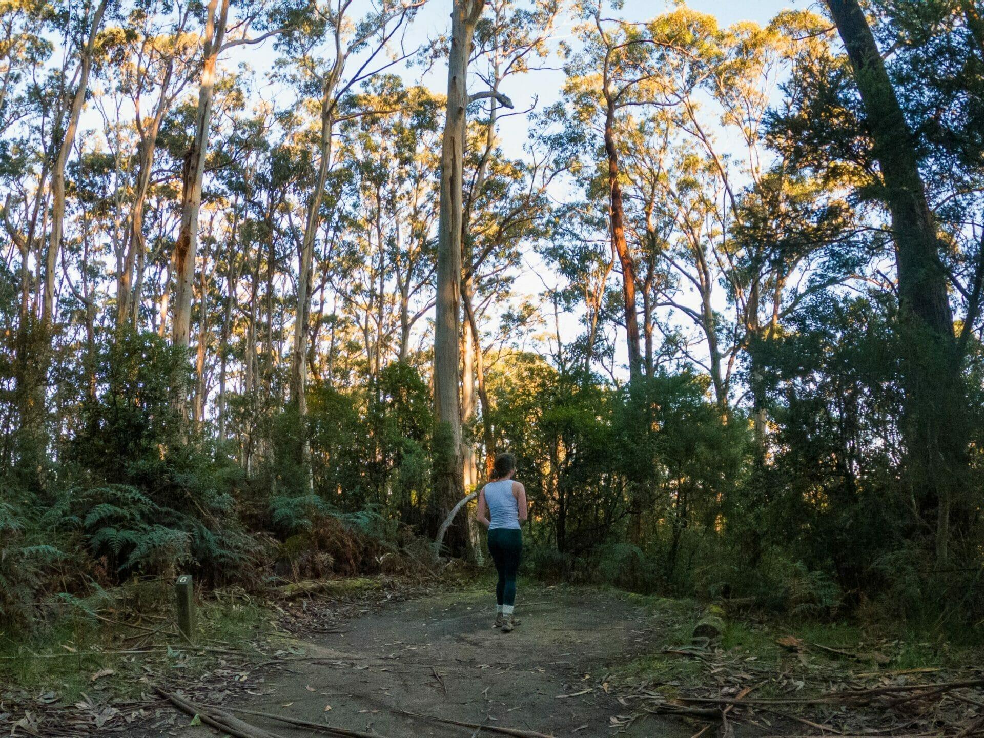 Great Ocean Walk Elliot Ridge campsite solo female hiker