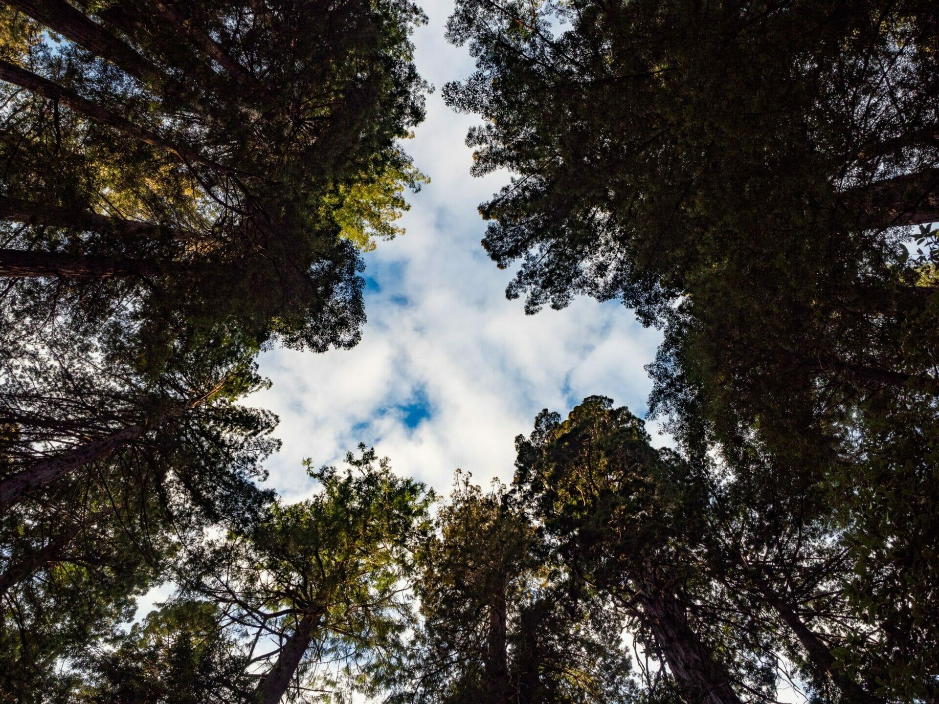Redwoods National Park California vanlife diaries Brooke Around Town