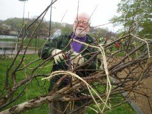Phil Blair planting a tree