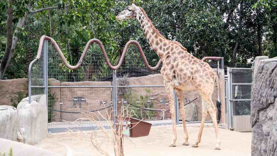 Traveling Solo To The San Diego Zoo: Tips and Tricks