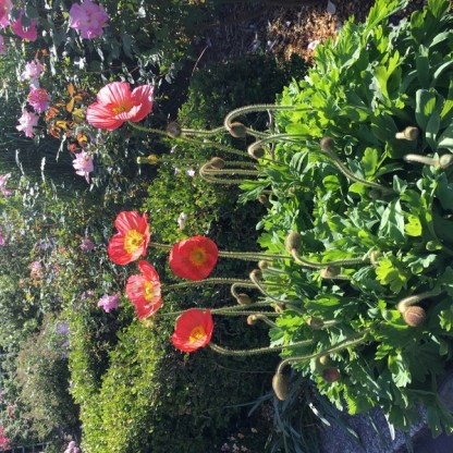 Brooklyn Botanic Garden Memorial Day 2016