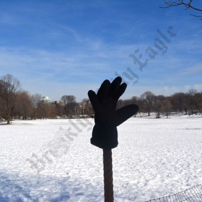 Prospect Park January 30th, 2016 - Brooklyn Archive
