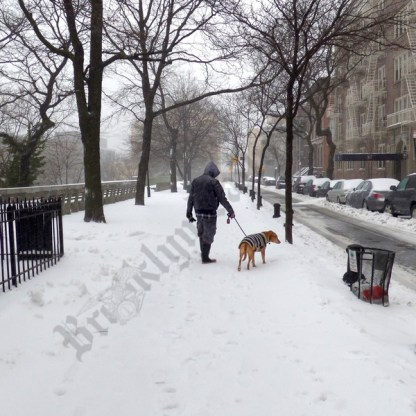 Scenes from Brooklyn Heights during Winter Storm Stella 03/14/2017 - Brooklyn Archive