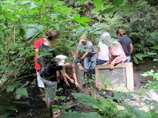 Volunteering in the creek