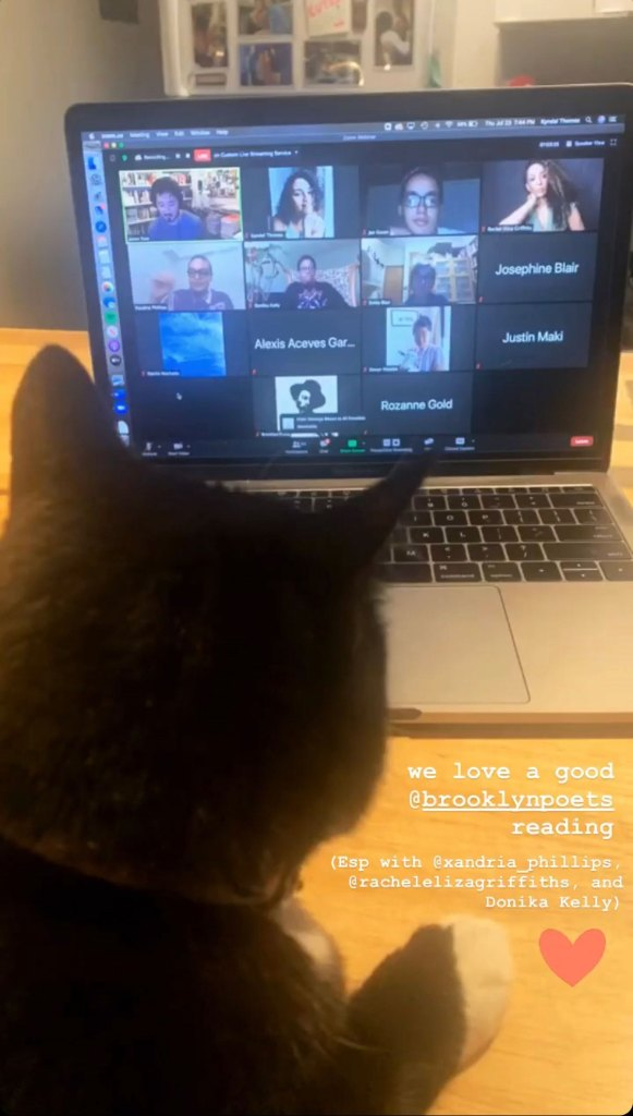 Cat views screen of Brooklyn Poets Reading Series