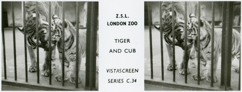 LondonZoo005