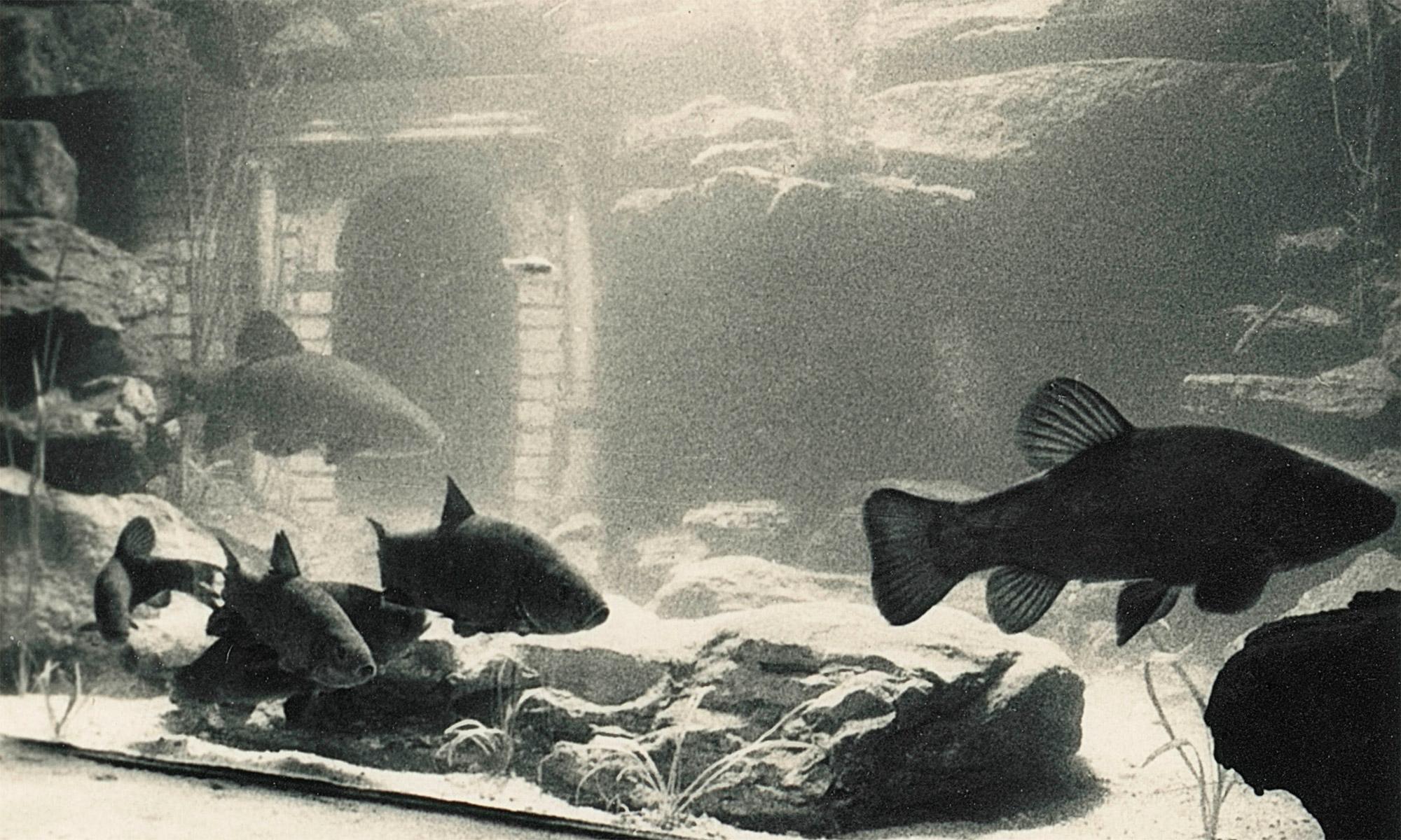 The Blue Grotto Aquarium at Eastbourne Redoubt
