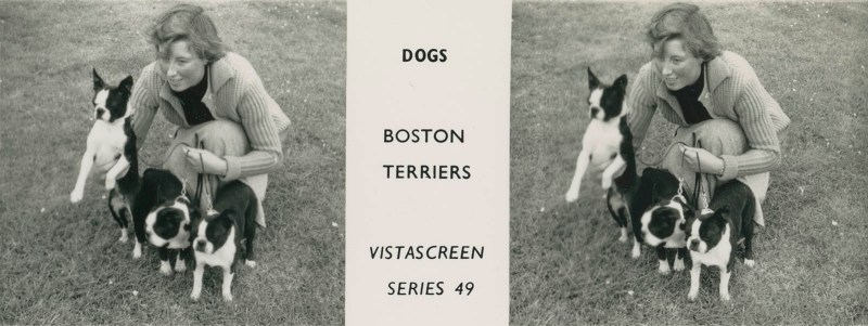 "Series 49 ""Dogs"" - Boston Terriers"