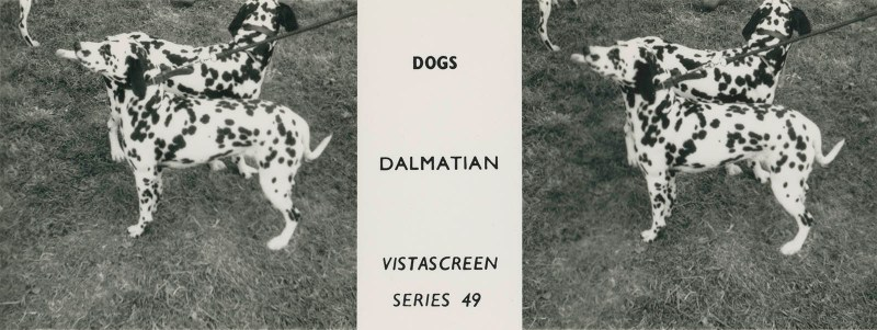 """Series 49 """"Dogs"""" - Dalmation"""