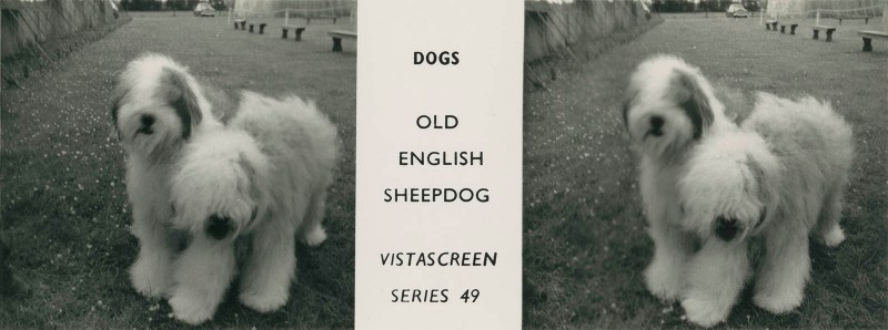 "Series 49 ""Dogs"" - Old English Sheepdog"
