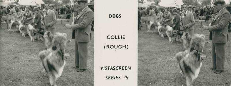 "Series 49 ""Dogs"" - Collie (Rough)"