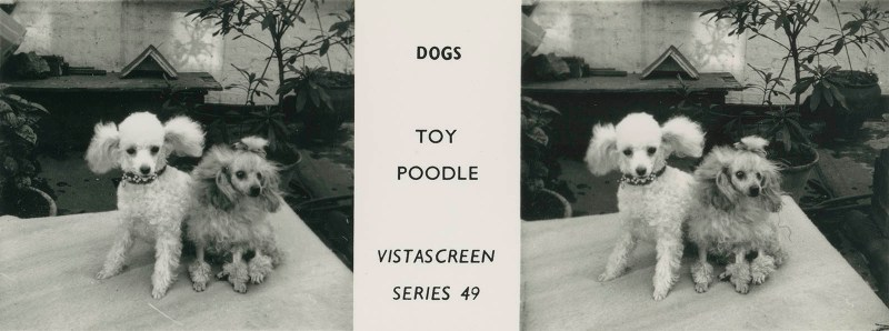 "Series 49 ""Dogs"" - Toy Poodle"