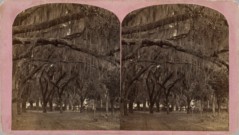 A view of a Southern cemetery, found at a Strasburg antique dealer