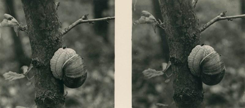 Aus der Lebensgemeinschaft des Waldes