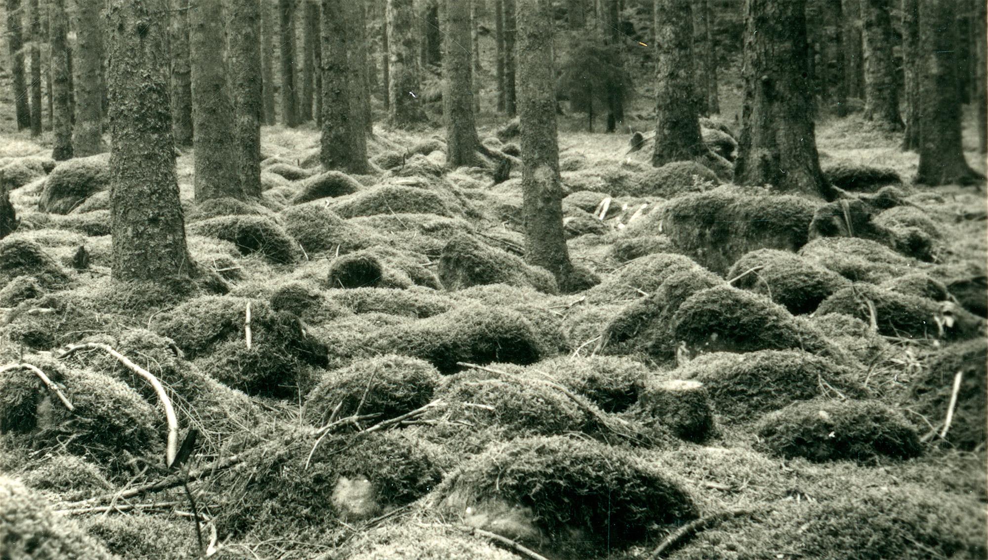 Aus der Lebensgemeinschaft des Waldes Header