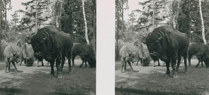 Tiere aus aller Welt, bild nr. 3