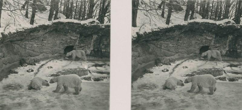 Tiere aus aller Welt, bild nr. 8