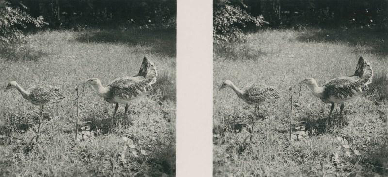 Tiere aus aller Welt, bild nr. 10