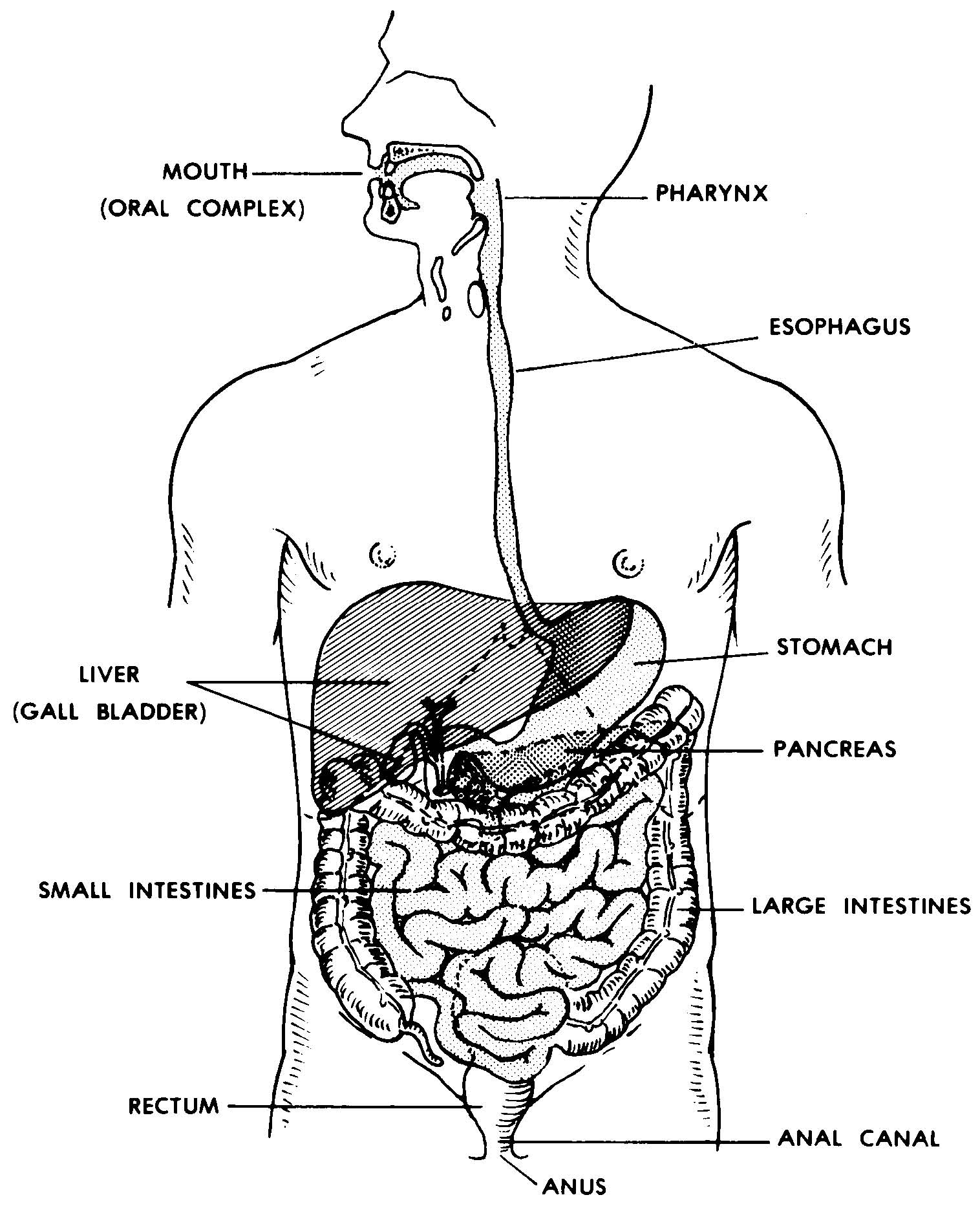 Images 06 Digestive System