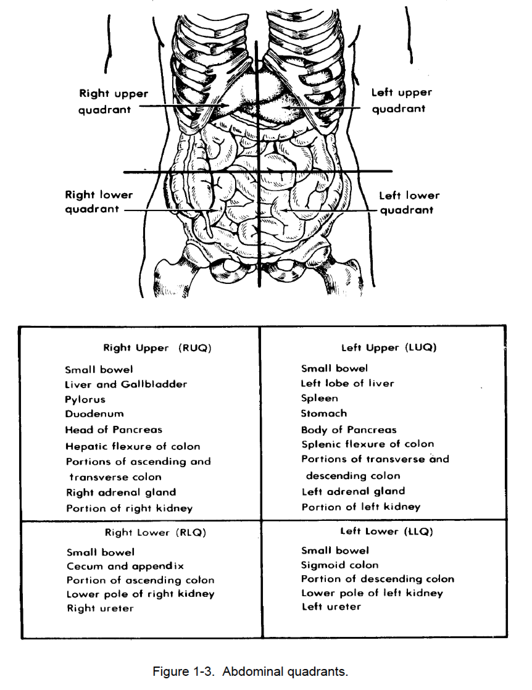 Body Quadrants Worksheet