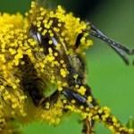 Cross-pollination: Paeds procedural sedation