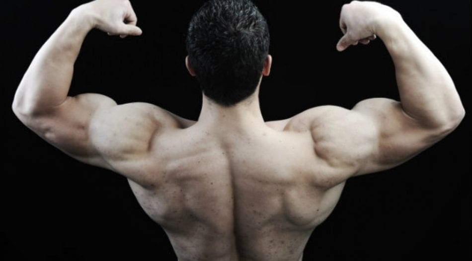 how does dianabol work: dianabol review