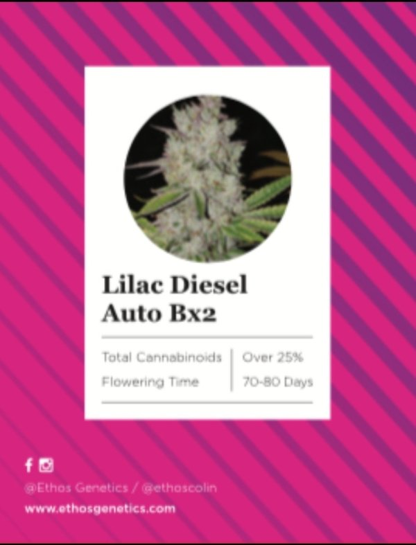 Ethos - Lilac Diesel Auto Bx2