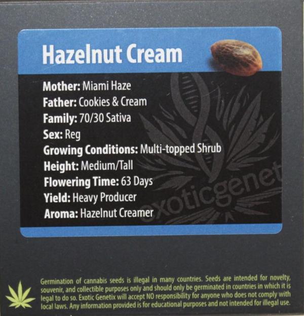 Exotic Genetix - Hazelnut Cream (Reg M/F)