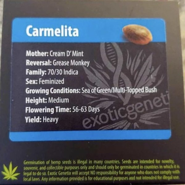 Exotic Genetix - Carmelita (Fem)