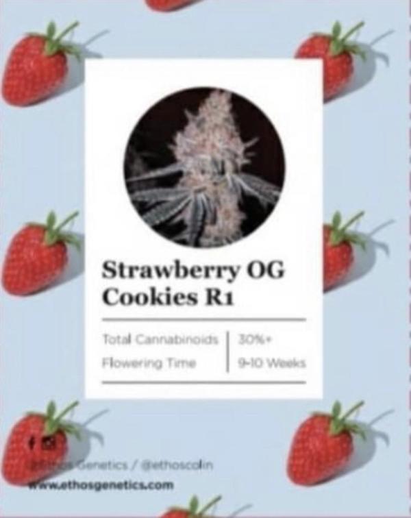 Ethos - Strawberry OG Cookies R1