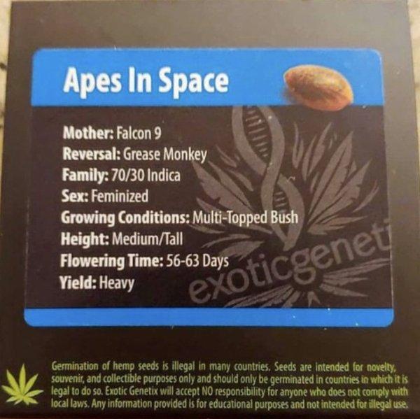 Exotic Genetix - Apes In Space (Fem)