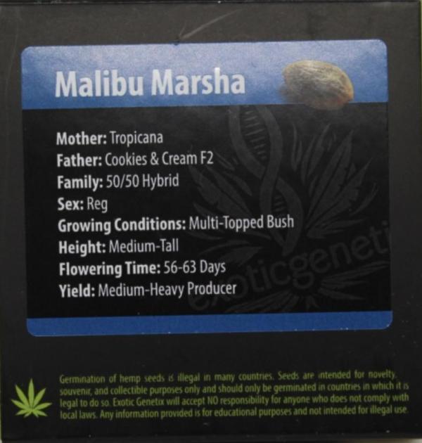 Exotic Genetix - Malibu Marsha (Reg M/F)