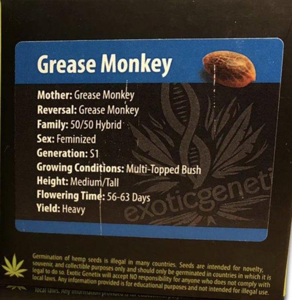 Exotic Genetix - Grease Monkey (Fem)