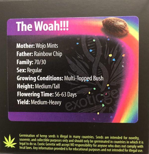 Exotic Genetix - The Woah (Reg M/F)