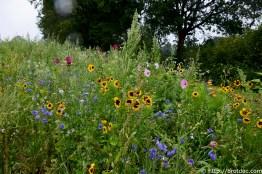 Wildblumen säumen die Wegesränder