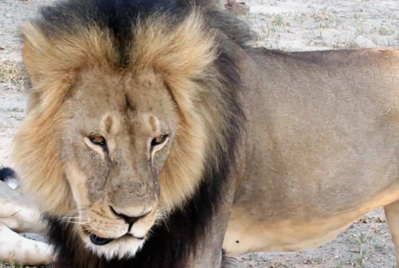 Cecil the lion is dead. Abortion continues.