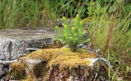 seed-tree