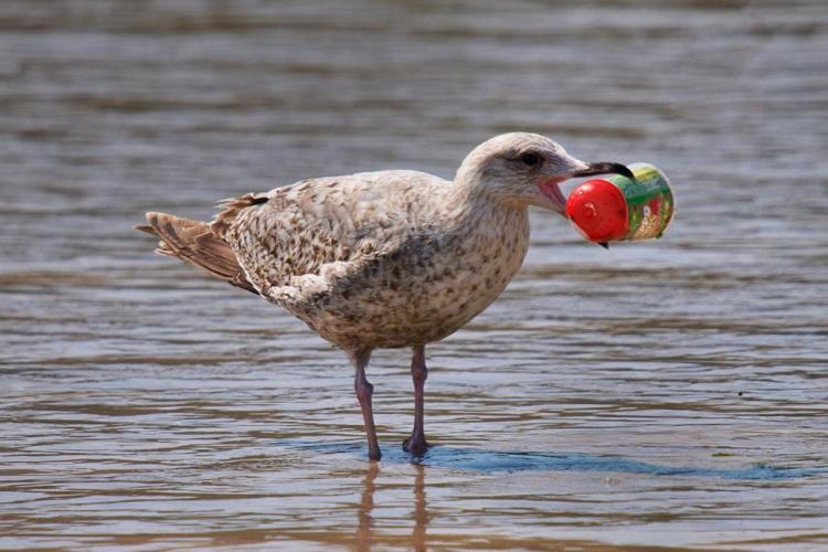 Plástico, alimentação e esfoliantes: qual a relação entre eles?