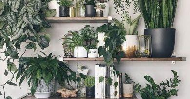 Prateleiras repletas de plantas